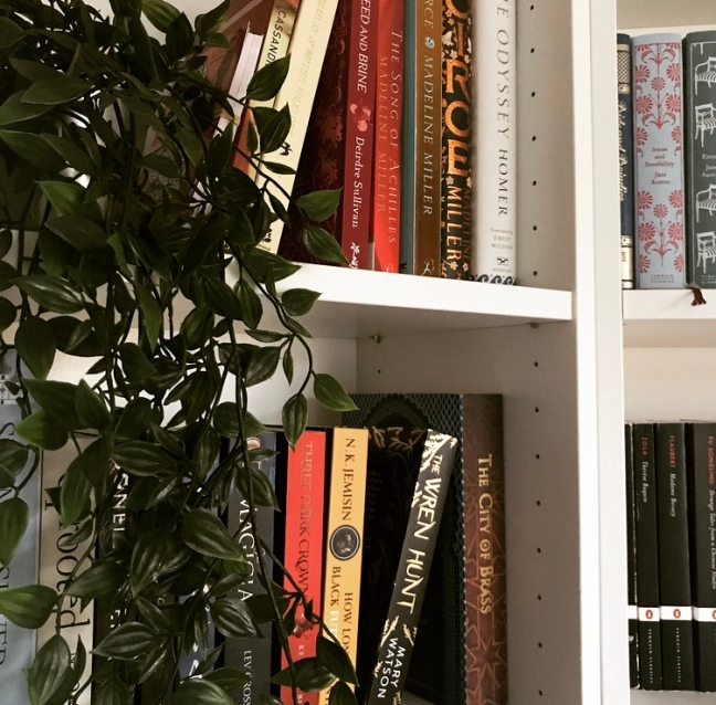 close up of shelves with plant